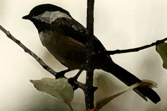Study late fall birds, then paint them with Brenda Sloane in watercolor at IRWS