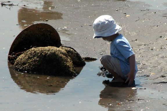 Go on a low tide exploration at Pavilion Beach in Ipswich, Massachusetts!
