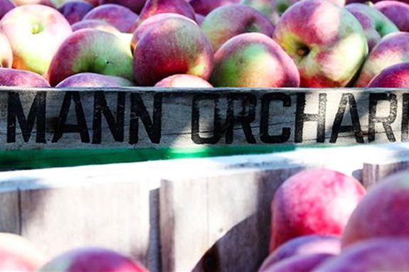 Visit Massachusetts Methuen Mann Orchard Festival and Customer Appreciation week