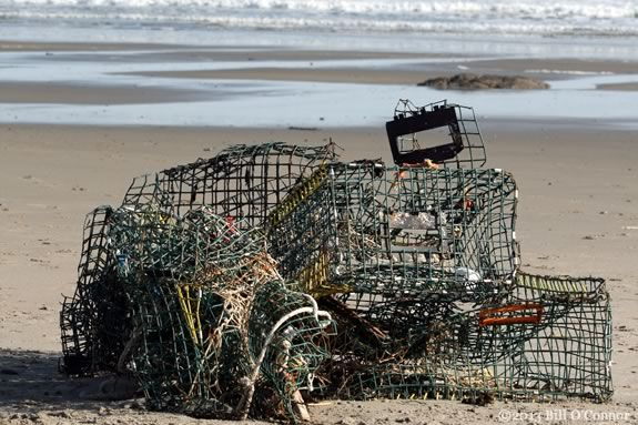Not only is this lobster gear an eyesore, it is dangerous to marine animals, seabirds and even humans.