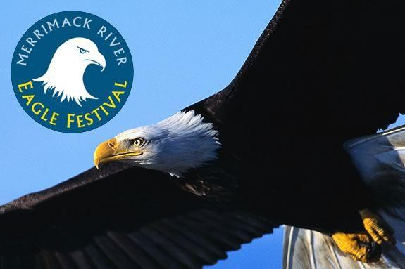 Come celebrate the return of the Eagles to the Merrimack Estuary!