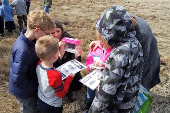 Identifying Minnows with naturalists from the Mass Audubon Joppa Flats Education Center in Newburyport Massachusetts.  Photo by Lisa Hutchings