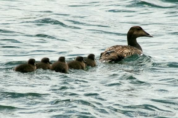 Learn about ducks, geese and swans at Mass Audubons Joppa Flats Education Center in Newburyport!!