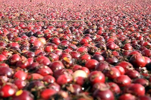 Enjoy Sampling natures harvest from cranberries to seaweed salad at Joppa Flats
