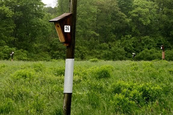 This guided tour will explore some of Groveland's 47 acres of conservation land, highlighting Veasey Park's Nesting Box Program.