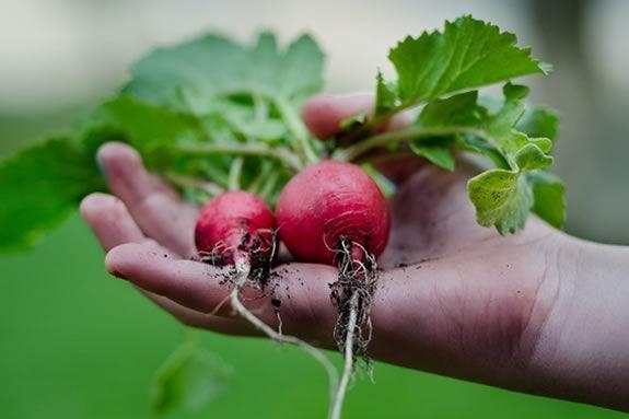 Newburyport Farmers find organic locally grown produce, meat, dairy Newburyport