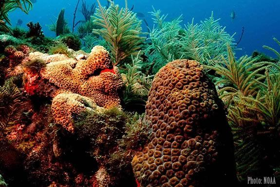 Coral Reefs are the subject of the next Imagine, Sing and Learn at Joppa Flats Education Center in Newburyport!