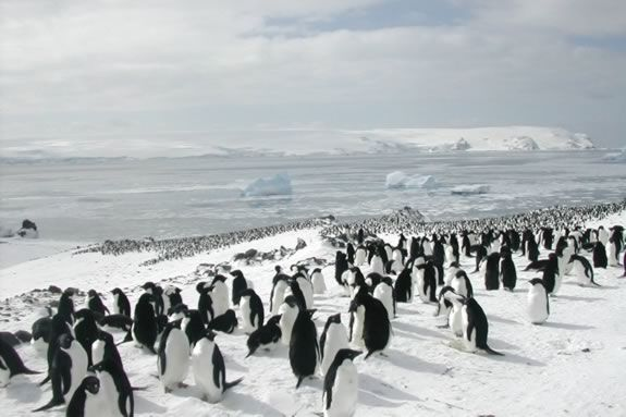 Come learn about penguins at Mass Audubon's Joppa Flats Education Center in Newburyport!