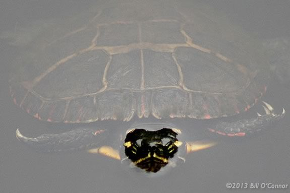 Learn about turtles through art at Ipswich River Wildlife Sanctuary.