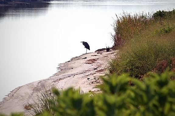 Tour and discover Nelson Island at Parker River Wildlife Refuge.
