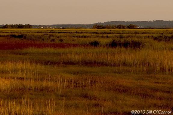 Explore Parker River Wildlife Sanctuary with your family and Mass Audubon!
