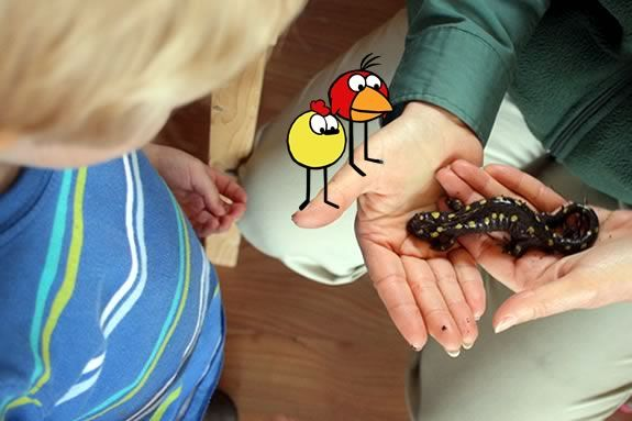 Kids will have hands-on experiences with live animals at the Ravenswood Park