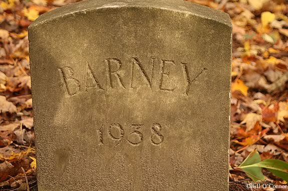 Learn the history of the Mosely family pets at Maudlsay State Park in Newburyport