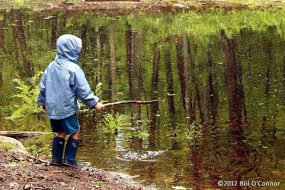 Come explore the pond habitat at Maudslay State Park in Newburyport!