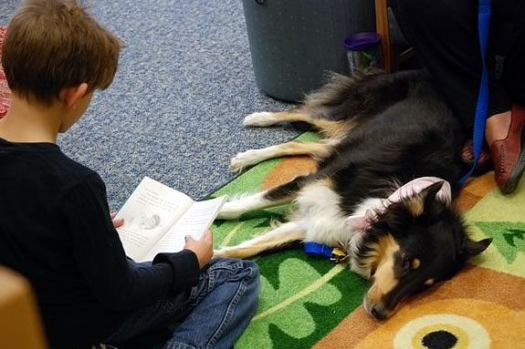 Kids can sign up to read to therapy dog Zyla at the Sawyer Free Library