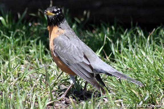 Read Birds in Your Backyard by Barbara Herkert, then explore IRWS!