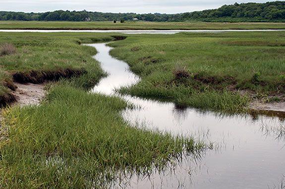 Get muddy with Audubon field teacher Andrew Prazar at Cox Reservation in Essex.