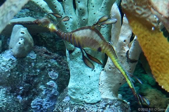 Kids will learn about seahorses and sea dragons at Maritime Gloucester!