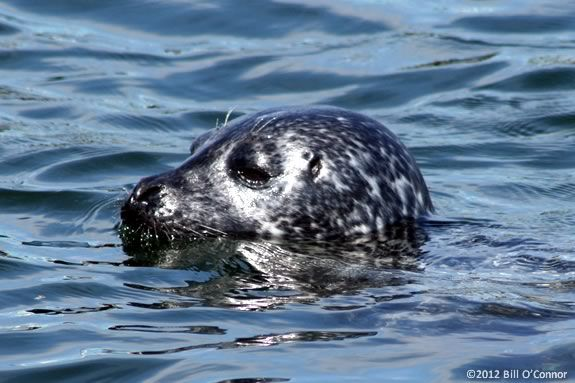 Come see the shorebirds and marine mammals of the Merrimack River.