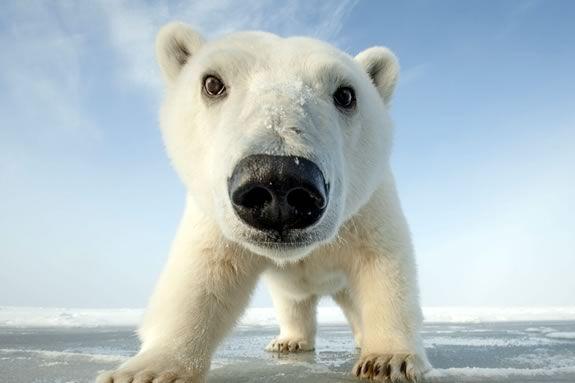 Come see 'Snowbound: Animals of Winter' at Parker River National Wildlife Refuge in Newburyport