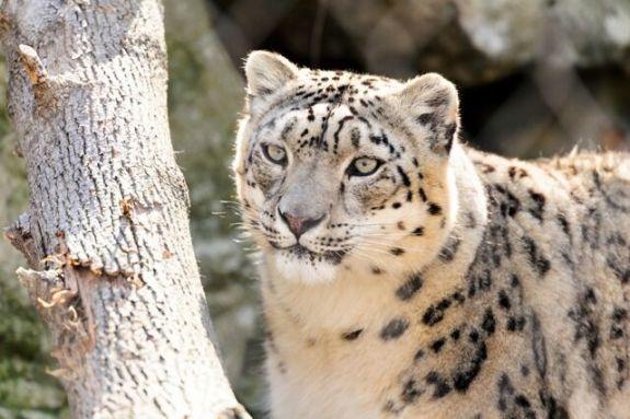 Zoo New England Vacation Week