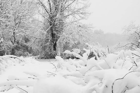 A snowy Winter day at Ipswich River Wildlife Sanctuary