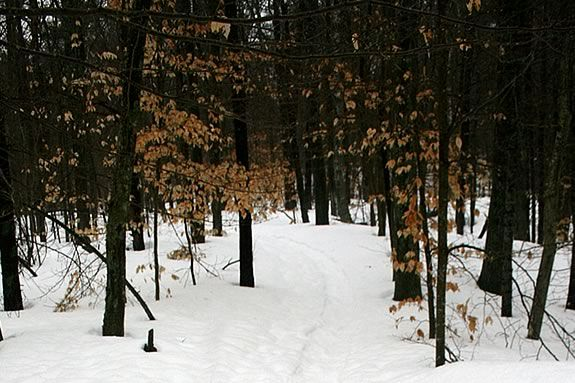 Enjoy the snowy trails of Ravenswood Park in Gloucester on Valentine's Day!