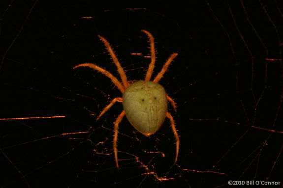 In Today's Nature Adventures at IRWS we'll read Are you a Spider? by Judy Allen
