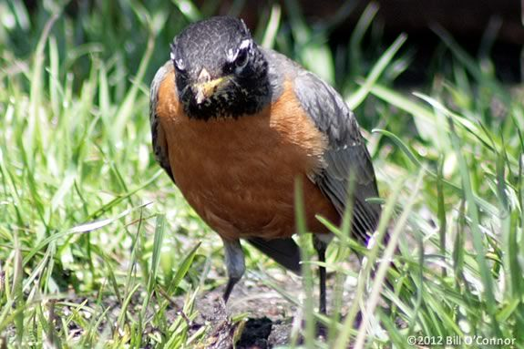 Preschoolers will learn about the birds of Spring at Joppa Flats Education Cente