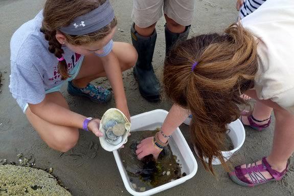 STEAM comes to the Mass Audubon Joppa Flats Education Center in Newburyport!