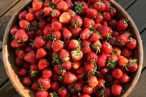 Come to Appleton Farms in Ipswich for this strawberry culinary workshop! Photo ©Bill O'Connor
