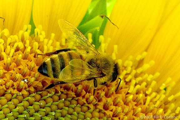 Come to newburyport Library for a gardening presentation focused on pollinators and how to plant to attract them. Photo by Bill O'Connor