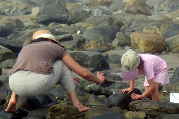 This parent/child walkabout focuses on tidal pool creatures and habitat.