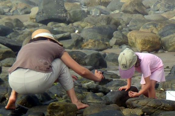 Kids ages 6-8 will investigate the intertidal zone with Joppa Naturalists!