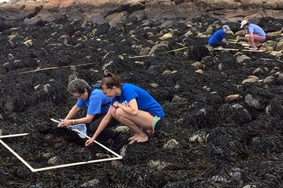 Seaside Sustainability Intern Molly and Francie Caudill of Manchester Coastal Stream Team collect data for Salem Sound Coastwatch