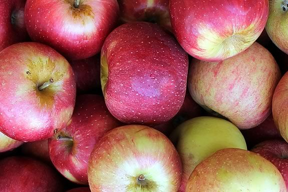 From the Orchard: Autumn Apple Harvest workshop with Carlyn Grieco at Appleton Farms in Ipswich