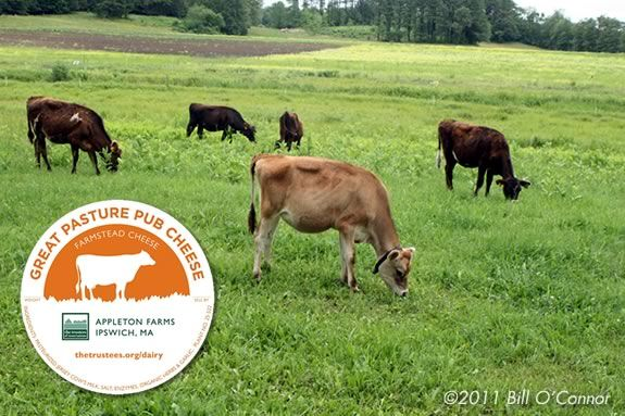 Buy Farmstead cheese, butter and 'barn ricotta' at Appleton Farms in Ipswich!
