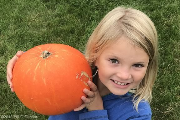 North Shore Kids' list of farms that offer 'Pick Your Own' pumpkins North of Boston Massachusetts
