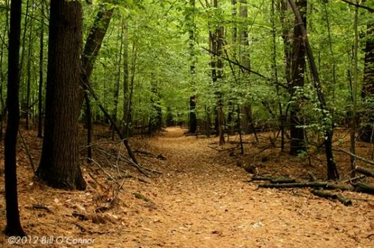 Join Mass Audubon to celebrate the forest with your family at the Ipswich River Wildlife Sanctuary.