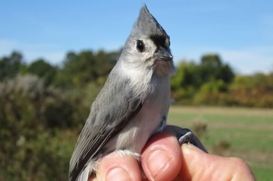Kids will learn about local and migrating birds at Joppa Flats Education Center.