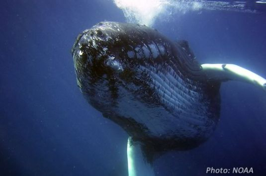 Kids can learn about migrating animals like whales at this Imagine Sing and Learn at Joppa Flats!